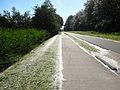 201406060 Populierenpluizen Bronslaan Lelystad.jpg