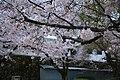 20160403 Himeji-Castle 3450 (26758662071).jpg