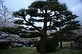 20160403 Himeji-Castle 3497 (26732429202).jpg