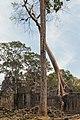 2016 Angkor, Preah Khan (41).jpg