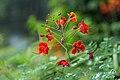 2016 Singapur, Ogrody botaniczne (029).jpg