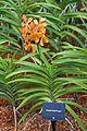2016 Singapur, Ogrody botaniczne (269).jpg