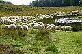20170921 schapen Loenermark1.jpg