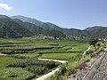 201908 Fields near Xintiecun, Lugu.jpg