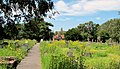 2036 Canford Cemetery Wild Haven (8052126642).jpg