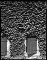 24.06.1964. Vue de la propriété. (1964) - 53Fi4707.jpg
