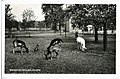 24917-Seußlitz-1929-Weinhards Wildpark, Hirsche-Brück & Sohn Kunstverlag.jpg
