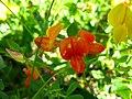 3751 - Zermatt - Flowers.JPG