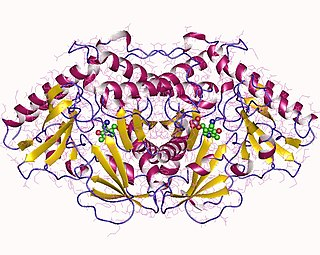 Tryptophan transaminase class of enzymes