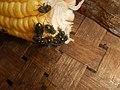 4690Common houseflies and delicacies Bulacan foods 01.jpg