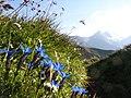 5672 Fusch, Austria - panoramio.jpg