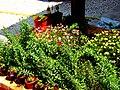 A@a My garden Larnaca Cyprus - panoramio (2).jpg