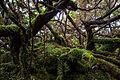 Açores - Terceira (23745363643).jpg