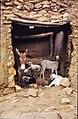 ASC Leiden - W.E.A. van Beek Collection - Dogon lifestock 02 - Dogon stable, Amani, Mali 1989.jpg