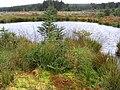 A bog pool in Kershope Forest - geograph.org.uk - 569450.jpg