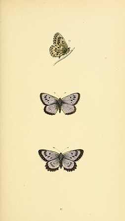 A history of British butterflies BHL14821346.jpg