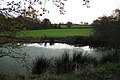 A pond north-west of Larch Covert - geograph.org.uk - 1584867.jpg