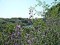 A walk around the reservoir - panoramio (7).jpg
