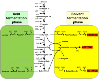 Acetone–butanol–ethanol fermentation Chemical process