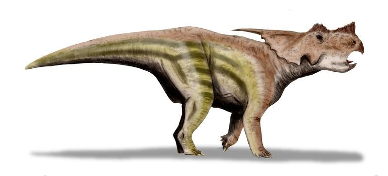 Achelousaurus BW