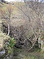 Adit, Inveruglas - geograph.org.uk - 1037399.jpg