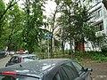 Aleea Somesul Mic - panoramio.jpg