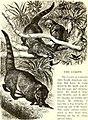 All about animals. Facts, stories and anecdotes (1900) (14777709652).jpg