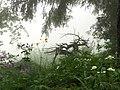 Alpenpflanzengarten Vorderkaiserfelden im Sommer.jpg