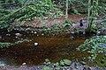 Alyth Burn in Den o' Alyth - geograph.org.uk - 1429661.jpg