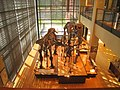 Amherst College Museum of Natural History - IMG 6506.JPG
