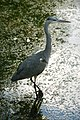 Amsterdam Zoo (3799382254).jpg