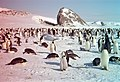 Anaglyphic picture of Emperor penguins and the Tour de Pise rock.jpg