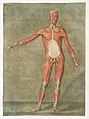 Anatomical illustration by Arnauld-Eloi Gautier-Dagoty , digitally enhanced by rawpixel-com 3.jpg
