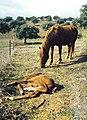Andalucía (1981) 03.jpg