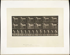 Animal locomotion. Plate 586 (Boston Public Library).jpg