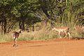 Animals at Pilanesberg National Park 19.jpg