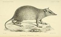 Annales des sciences naturelles (1878) (18407912601).jpg