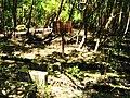 Antiga Salina - panoramio.jpg