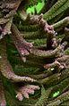 Arboretum 26.jpg