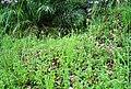 Areal perladangan di Petapahan (117).JPG