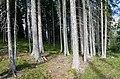 Arosa - forest.jpg