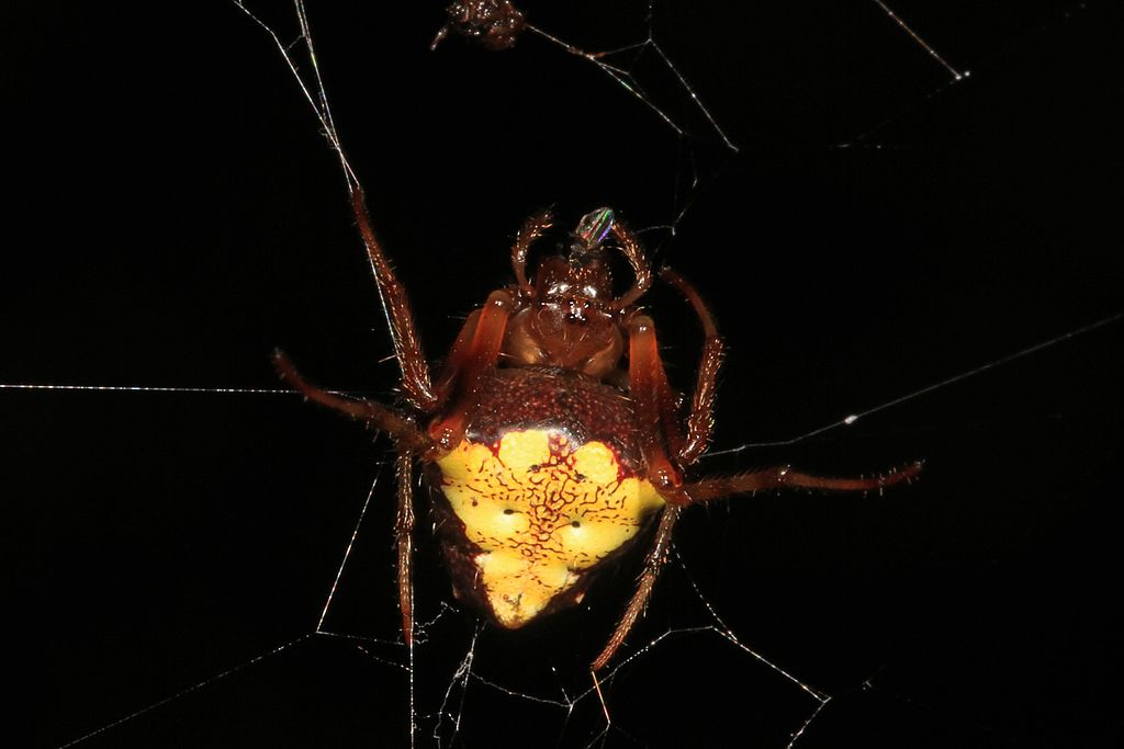 Spiders of Missouri   Missouri's Natural Heritage