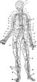 Arteriessystem.png