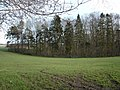 Ashmore Plantation - geograph.org.uk - 321691.jpg