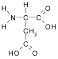 Aspartic Acid.png