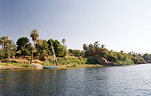 Photography of the Nile with a lush green papyrus plants and palm trees in the background