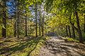 Au bonheur de l'automne au parc Mont-Royal (15341849438).jpg