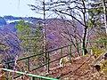 Aussichtsbank Wiesentfelsen - panoramio.jpg