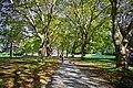 Autumn, Stanley Park Oct, 2015 - 21767292280.jpg