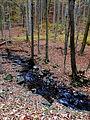 Autumn14Slovakia3.JPG